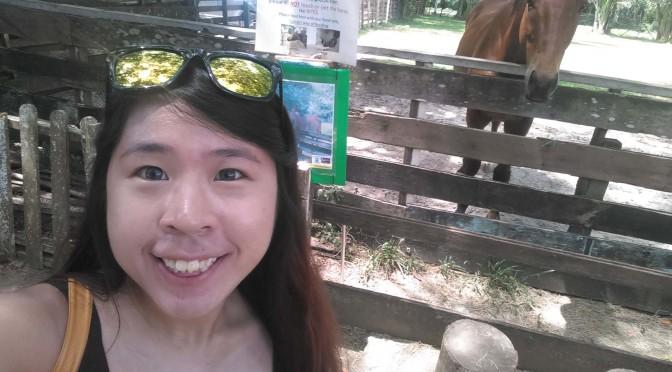 The Animal Resort 2