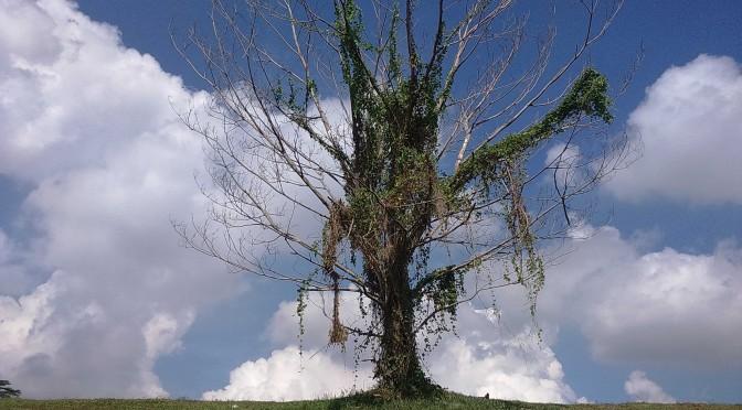 punggol lone tree 3