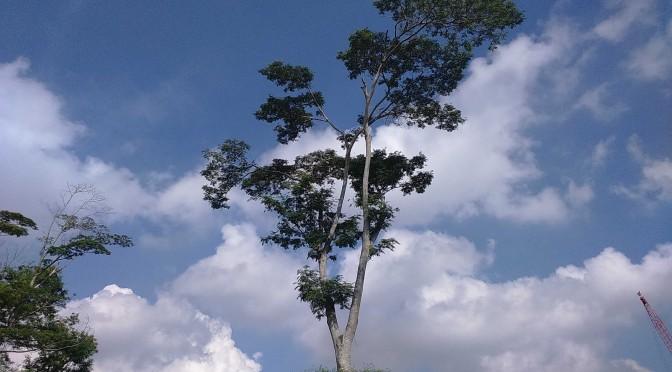 punggol lone tree 4